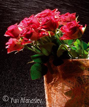 Профессиональная съемка цветов. Фото Юрия Афанасьева