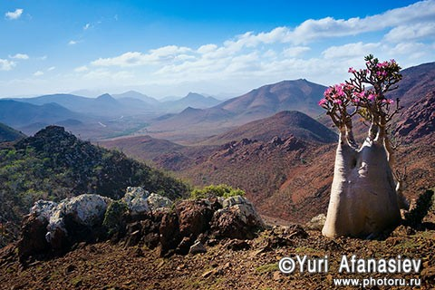 Yemen & Socotra photo tours. Photographer Yuri Afanasiev