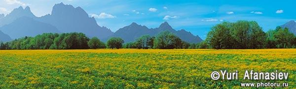 Пейзаж панорамная съемка поле желтых